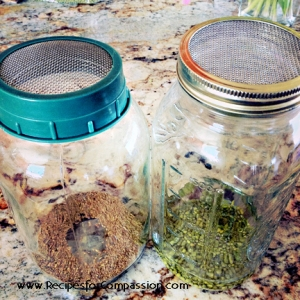 how to make sprouts, how to sprout at home
